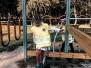 Priešmokyklinukų kelionė į Jaunimo parką