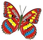 drugeliu
